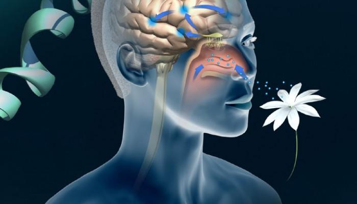 علت از دست دادن حس بویایی (آنوسمی)+درمان