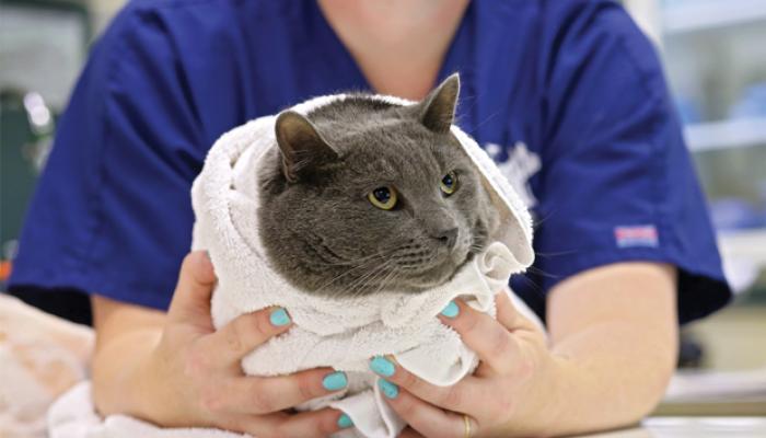 محل نگهداری گربه ها