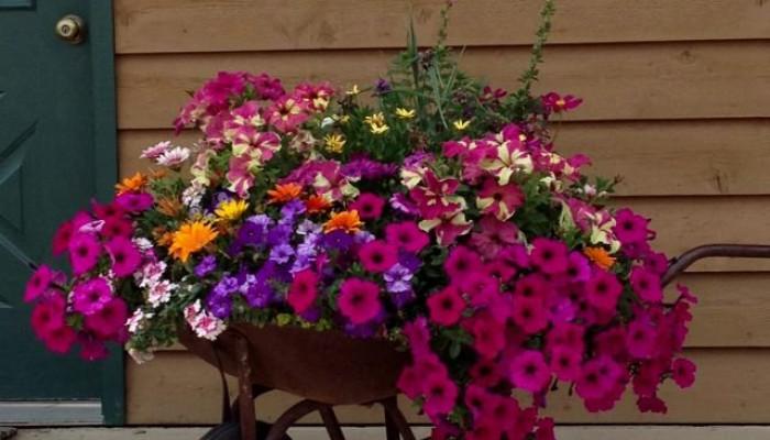 گل آرایی مناسب حیاط و باغ و ویلا