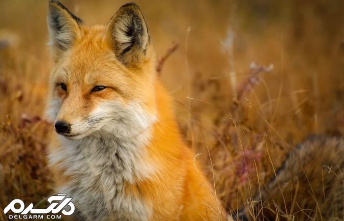 عکسهای برتر دنیای حیوانات به انتخاب نشریه نشنال جئوگرافی