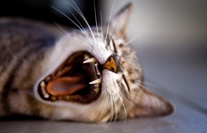 7 علت لنگیدن پای گربه و توصیه دامپزشک + فیلم