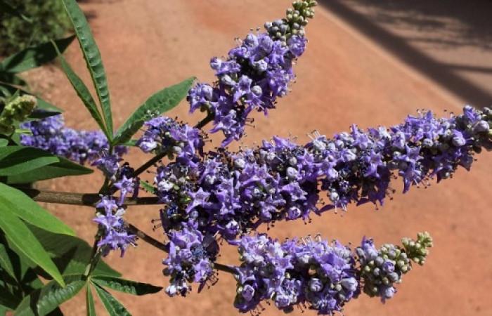 فواید جادویی قرص گیاهی ویتاگنوس (Vitagnus) برای بانوان