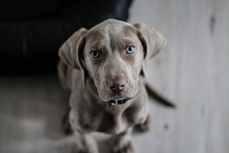 علل تشخیص و درمان سرطان غدد لنفاوی در سگ