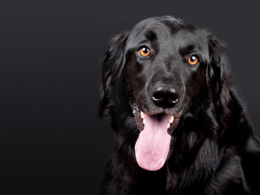 آیا می دانید سگ شما چند سال دارد ؟ راههای ساده تشخیص سن سگ