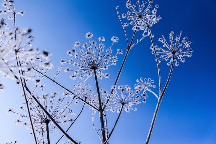 گل های زمستانی / گل های مناسب فصل سرما کدامند؟