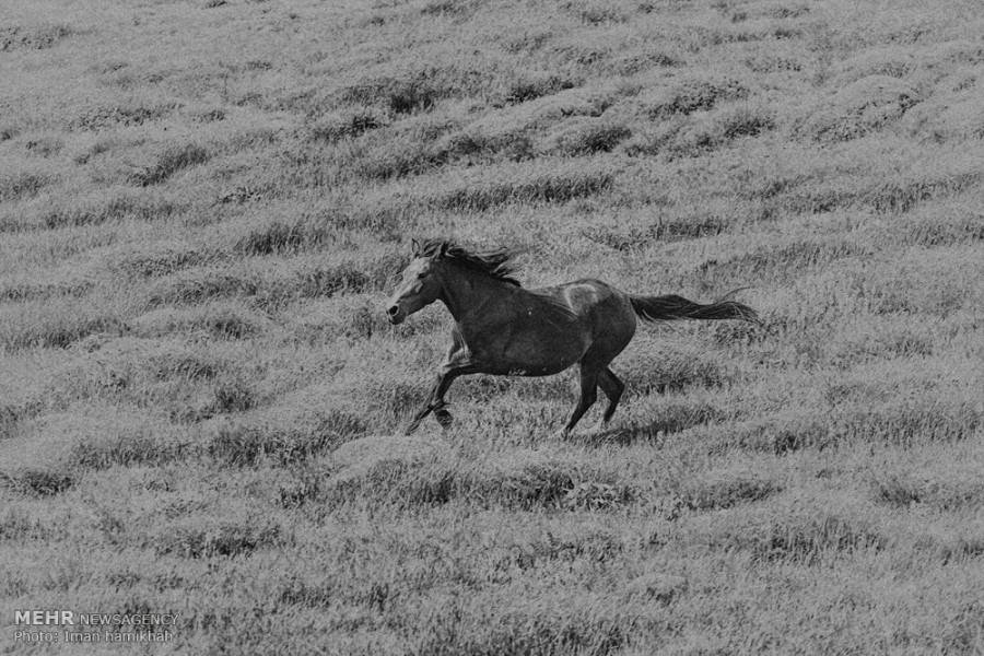 رویاهای خاکستری... / تصاویر