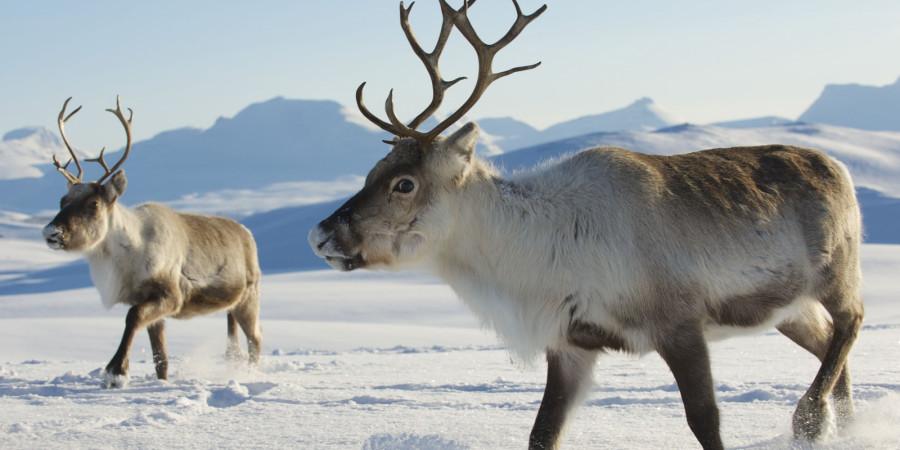 آیا تابحال به وضعیت حیوانات در زمستان ها فکر کرده اید؟
