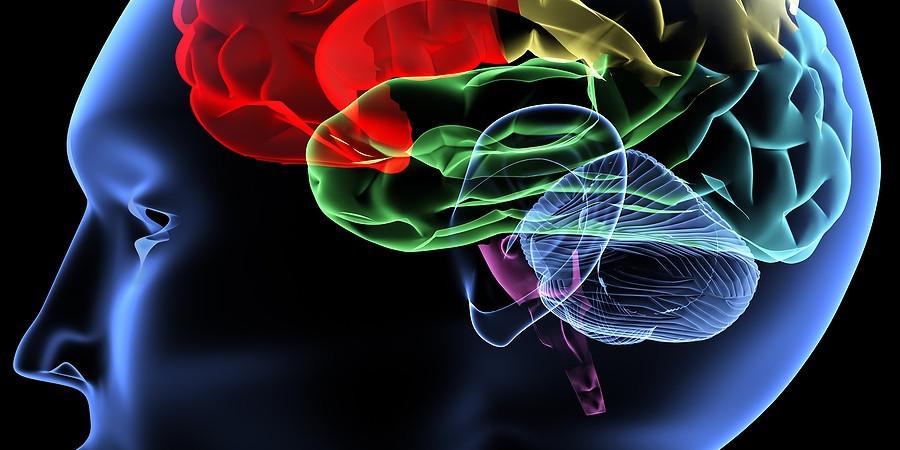 9 واقعیت جالب در رابطه با عملکرد مغز