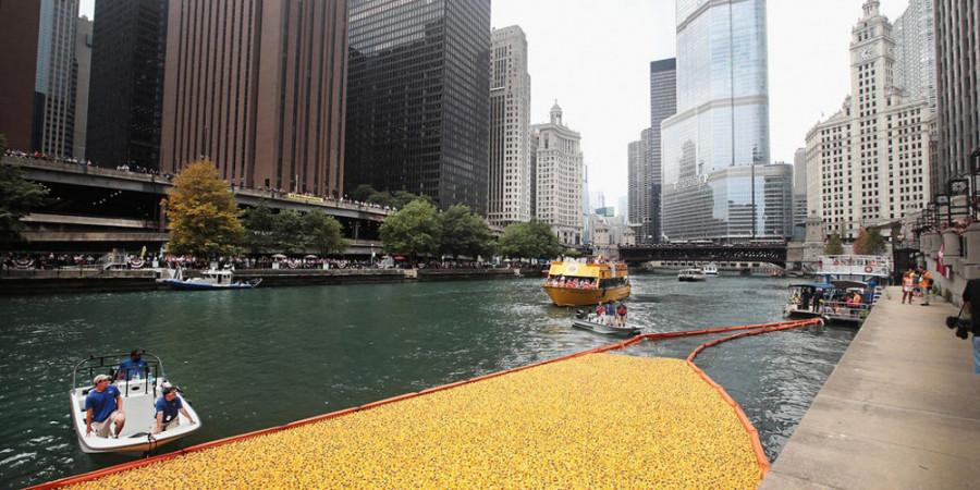 تصاویر اردک های پلاستیکی در رودخانه شیکاگو